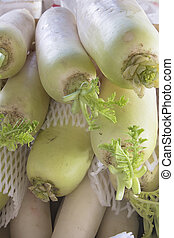 Daikon White Radish - Daikon East Asian White Radish at...