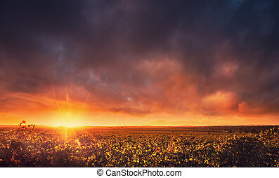 Barossa Vines - Sunset over the Barossa Valley, South...