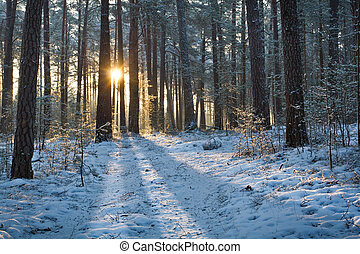 Sunrise in forest at winter