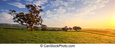 Clare Field - A country field in Clare, South Australia