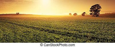 Valley of Gold - Panoramic image of a Clare Valley sunrise,...