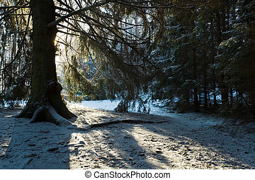 Silhouette of the tree in forest at winter