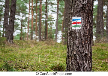 Hiking trail on the tree in summer