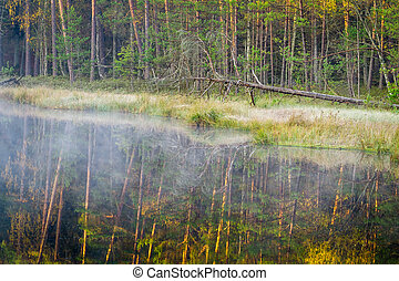 Misty lake in the woods