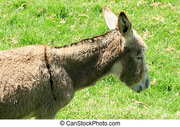 Donkey in a Pasture