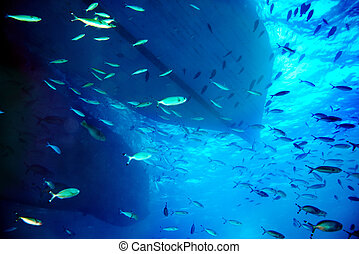 Coral fish in blue water. - Group coral fish in blue water.