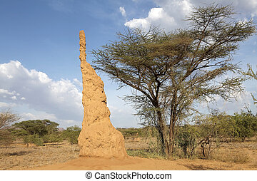 Termite mound in the african savanna