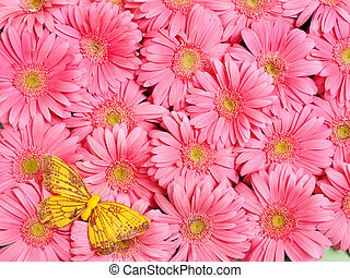 Background of flower - Background of gerbera flower