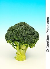 Raw broccoli - Raw broccoli against a blue background