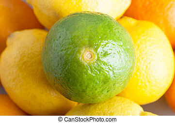Lime and Citrus Fruits - Close up (macro) overhead shot of a...