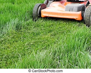 Grass mowing - Cropper in action on the spring grass