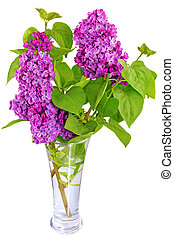 Beautiful Lilac in the Vase. Isolated over white . -...