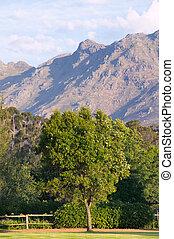 Stellenbosch, South Africa - Scenic in stellenbosch wine...