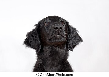 a black puppy looking hopefully, with copyspace