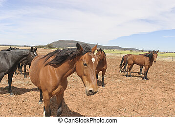 mammal - horses in rural paddock with cloudy sky