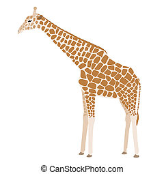 Giraffe vector - Brown cartoon giraffe isolated on white