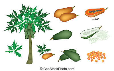 A Set of Fresh Papayas and Papaya Tree - Fresh Fruits, An...