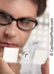 Microscope Slide - A scientist holding up a prepared slide