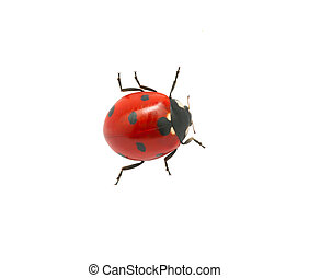 Ladybug isolated on the white