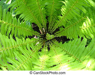 Fine pattern from leaves of fern - image of nice pattern...