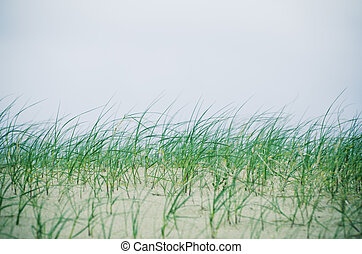 grass on the sandy