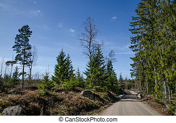 Dirt road in a nordic forest - Winding dirt road in a nordic...