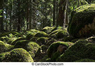 Mossy rocks in a nordic coniferous forest. From the province...