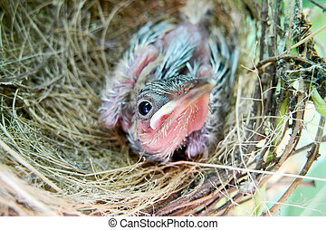 baby bird in nest