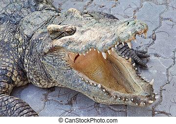 crocodile and jaw