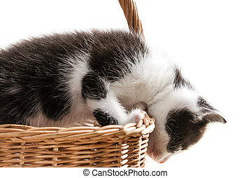 Little kitten is trying to get out of the basket