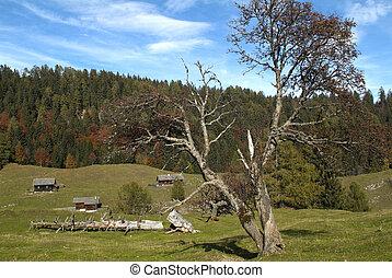 Austria, Carinthia - Austria, upland pasture on Waisacher...