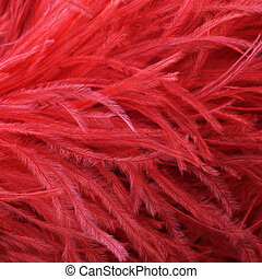 Red ostrich feather boa - Closeup detail of an soft fluffy...
