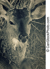 Deer head Toned closeup shot