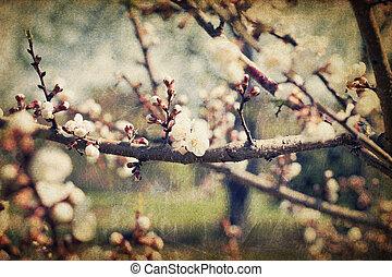 Retro sakura flowers blossoms at spring