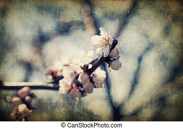 Retro apple-tree flowers at spring