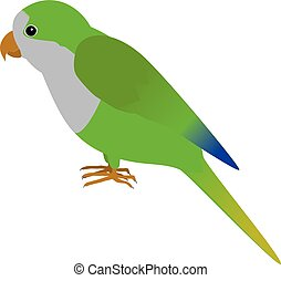 Quacker Parrot - An illustration of a quaker parrot