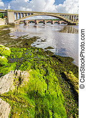 Green seaweed under bridges in Berwick-upon-Tweed