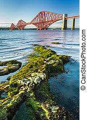 The Forth Road Bridge and seaweed