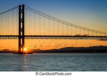 Birds flying at sunset under the bridge