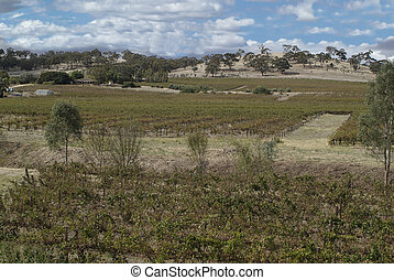 Australia, Barossa Valley - wine factory in Barossa Valley...