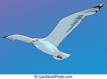 seagull and the blue sky