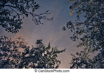 Night star sky with tree branches silhouette