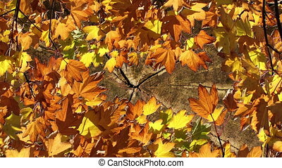 Autumn Background - Fall leaves an wooden background