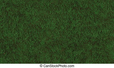 Grass Field Loop - Animation of grassy field Seamless loop...