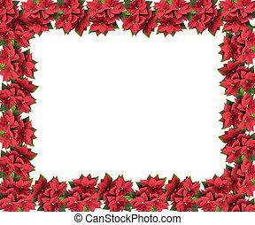frame made from christmas Bethlehem star flower