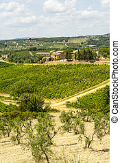 Tuscany - Chianti vineyards and olive trees, - Chianti...
