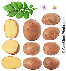 potatoes - Bunch of potatoes on white background. Clipping...