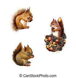 Red squirrel eating, Baby squirrel, American gray squirrel...