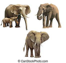 Elephants, Baby elephant, big adult African elephant...