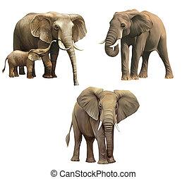 Elephants, Baby elephant, big adult African elephant...